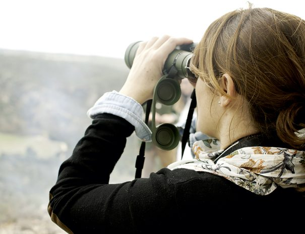 Birdwatching / Cutamilla